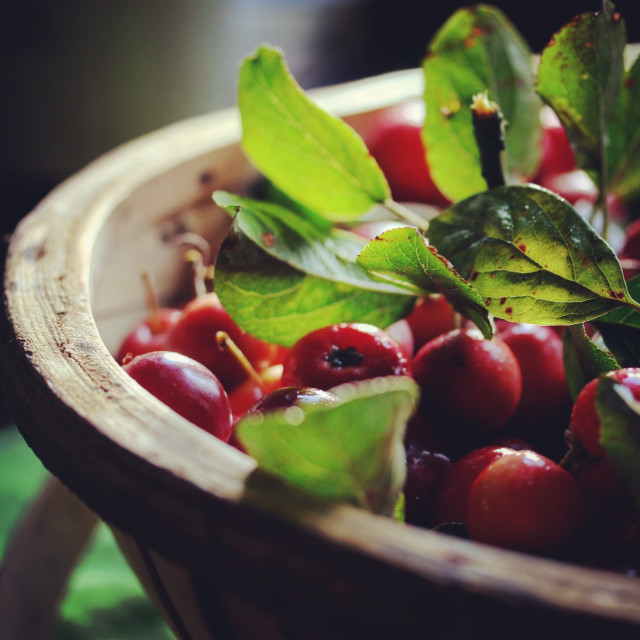 """Crabapples with leaf in wooden trug"" stock image"