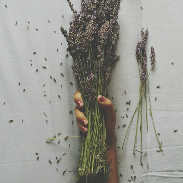 """""""Lavender love"""" stock image"""