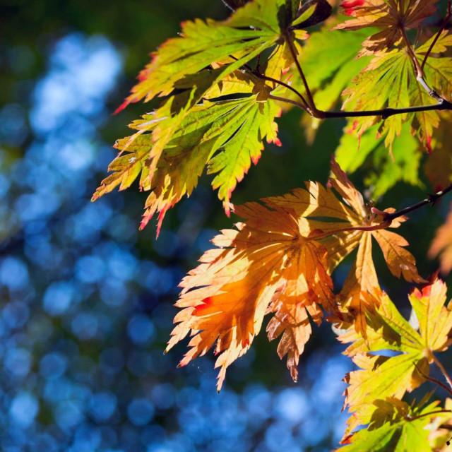 """Autumn Bokeh"" stock image"