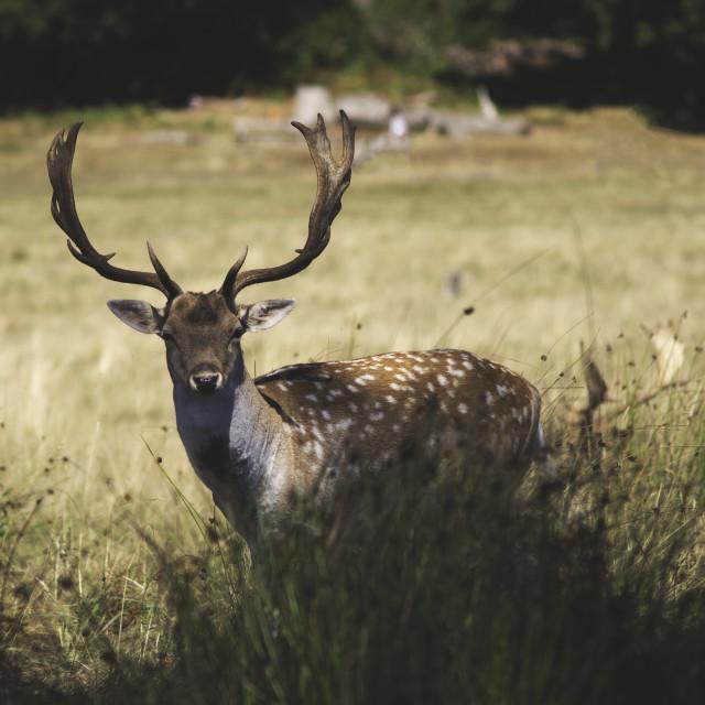 """Clever Deer"" stock image"