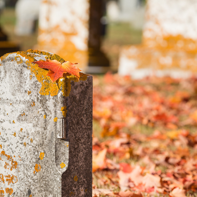 """""""Fallen maple leaf on tombstone in autumn cemetery"""" stock image"""