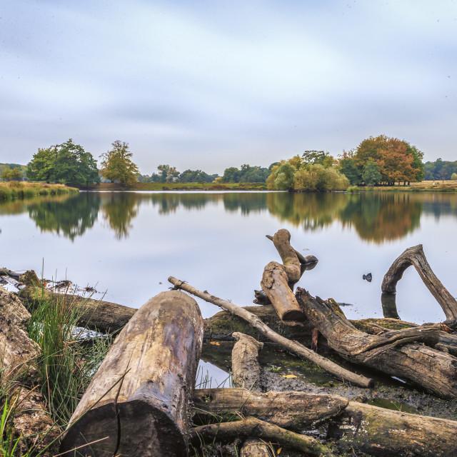 """Landscape In Richmond Park"" stock image"