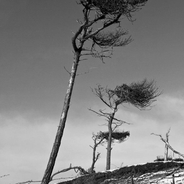 """Windswept"" stock image"