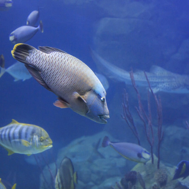"""Tropical fish"" stock image"