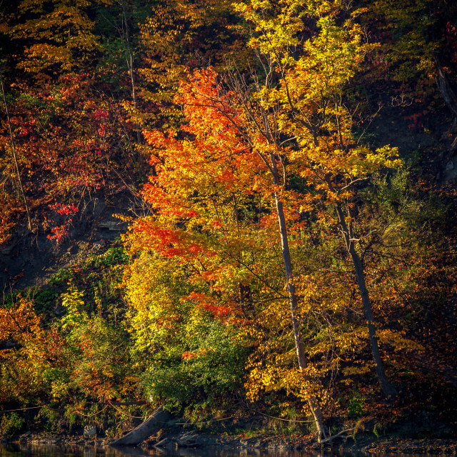 """""""Autumn in Toronto, Humber River"""" stock image"""