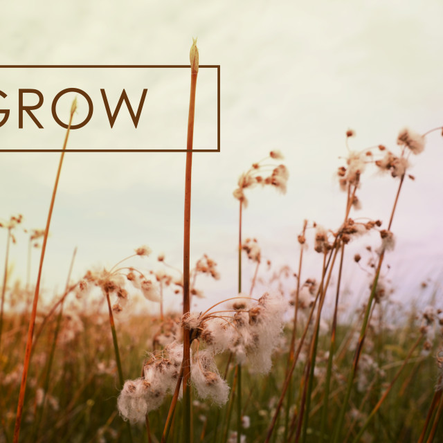 """""""Grow concept quote wildflower background"""" stock image"""