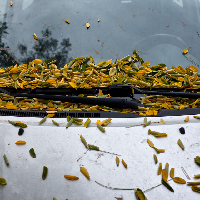 """Leaves on Car"" stock image"