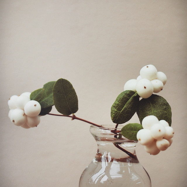 """Still life. White berries."" stock image"