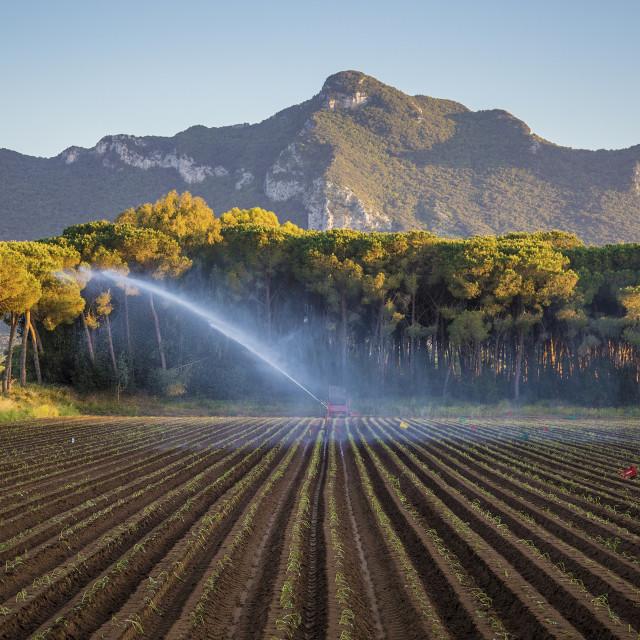 """Water Irrigation"" stock image"
