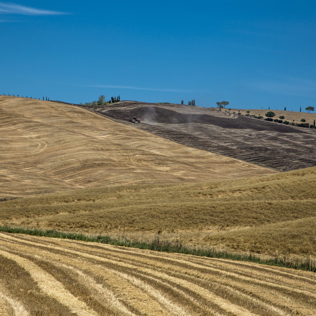 """Tuscany Wheat fields"" stock image"