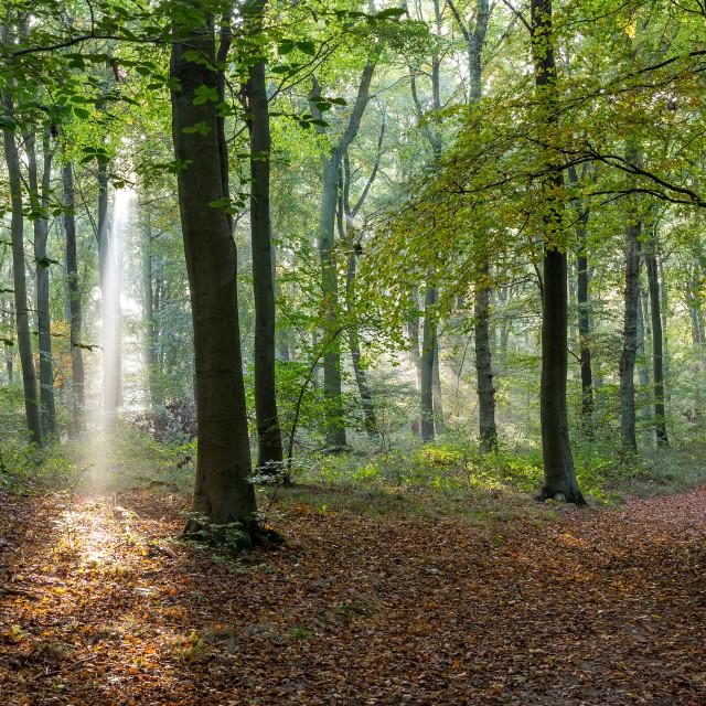 """""""Beginnings Of Autumn"""" stock image"""