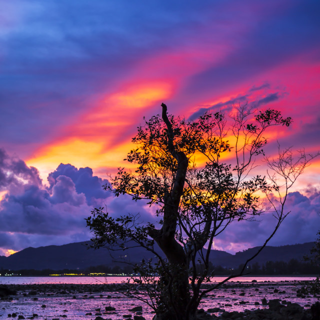 """Firey sunset with mangrove tree"" stock image"