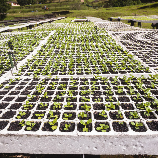 """""""Agriculture Seedling Trays Organic Crops"""" stock image"""