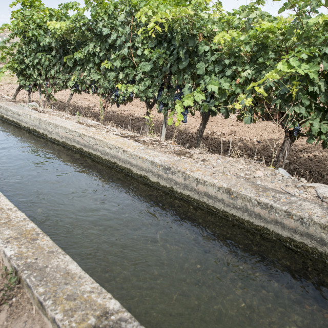 """Vineyards and irrigation canal"" stock image"