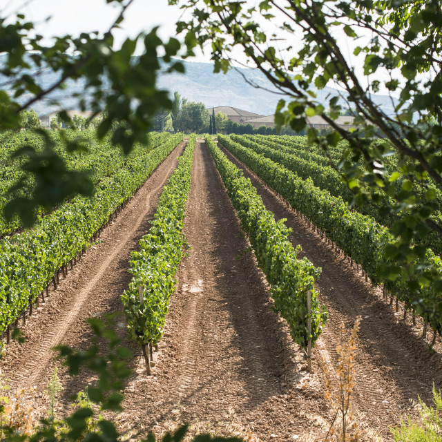 """Vineyards and winery"" stock image"