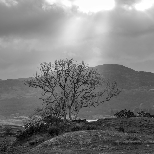 """""""Lonely tree in Snowdonia, Wales"""" stock image"""