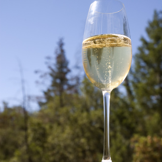 """""""Sparkling wine in a glass bathed in sunshine and poised to drink"""" stock image"""