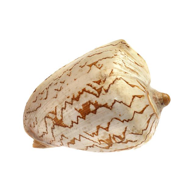 """Shell."" stock image"