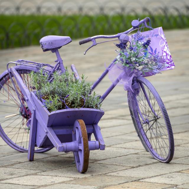 """Bicycle."" stock image"