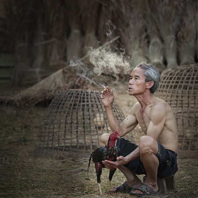 """Old man cleaning the chicken at countryside Thailand,"" stock image"