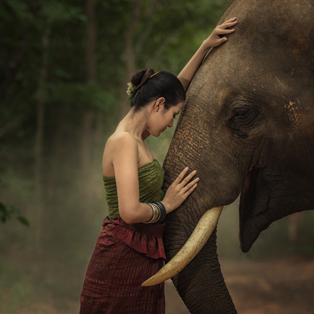 """Closeup portrait of a beautiful girl with elephant."" stock image"