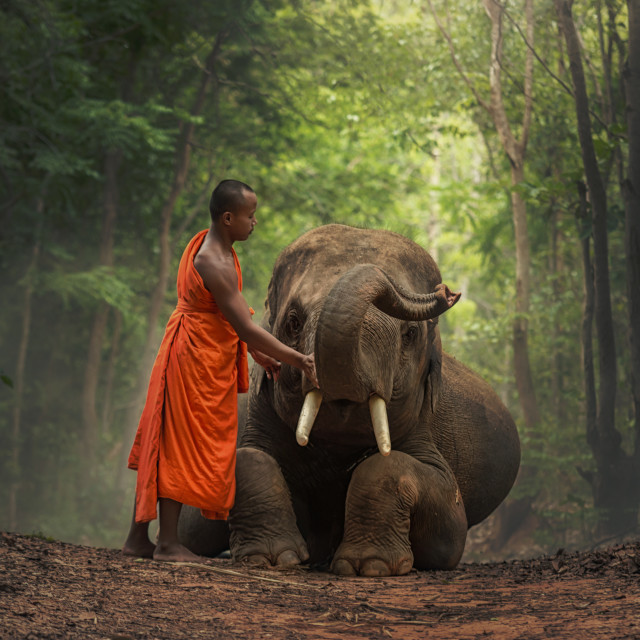 """Monk with elephants ."" stock image"