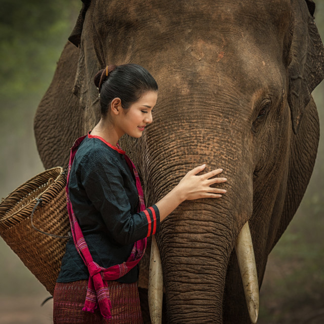 """Asia woman and elephant with Thai culture traditional."" stock image"