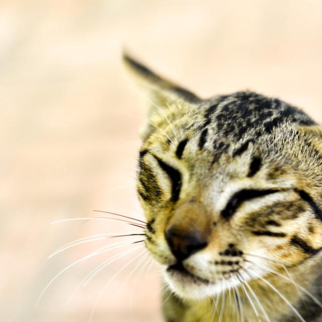 """Beautiful cat"" stock image"