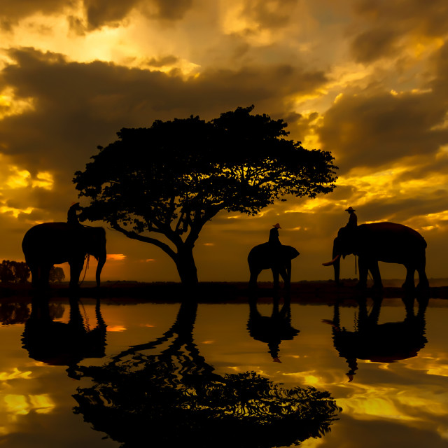 """Silhouettes of elephants."" stock image"
