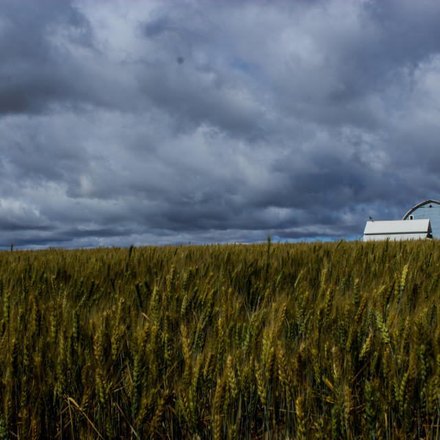 """Montana field"" stock image"