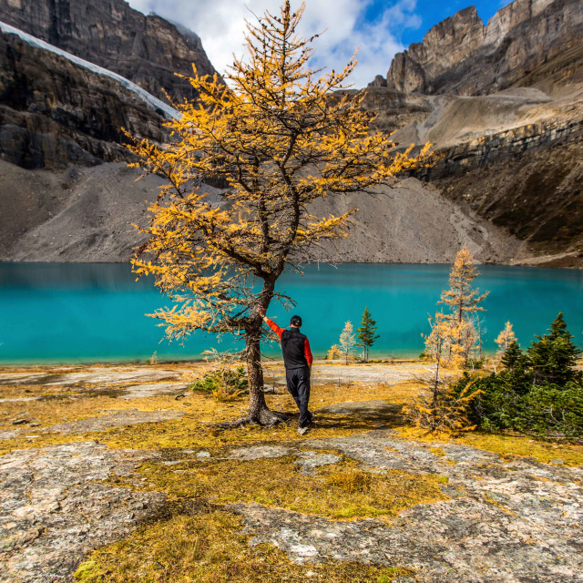 """""""Larch and Lake"""" stock image"""