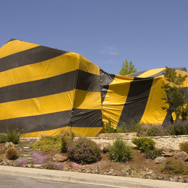 """""""home tented for termites"""" stock image"""