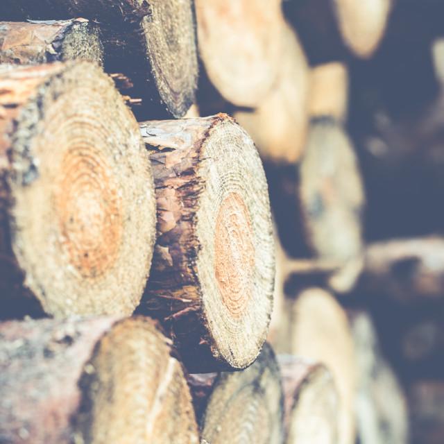 """Cut wood"" stock image"