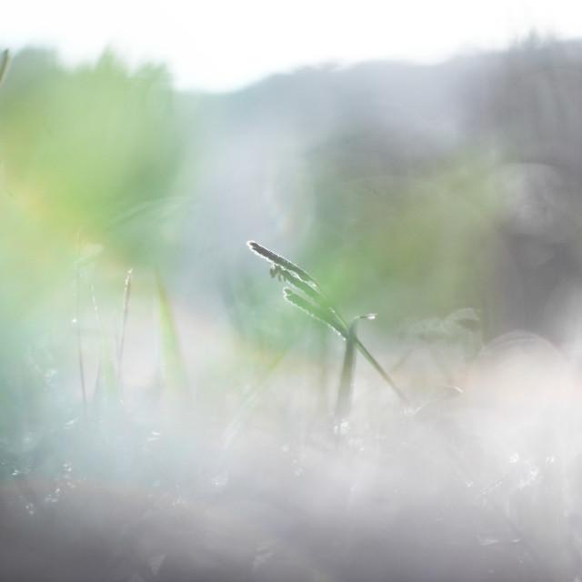 """Morning light |green Grass"" stock image"