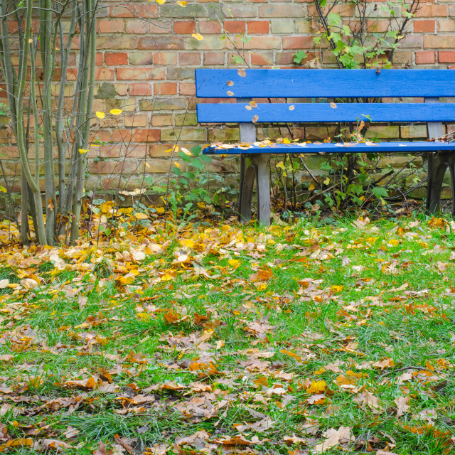 """""""Blue Bench In Autumn"""" stock image"""