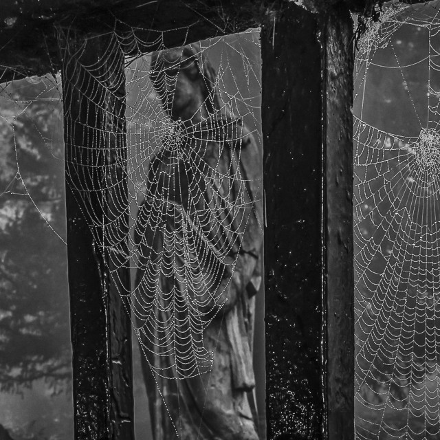 """Webbed Cemetery"" stock image"