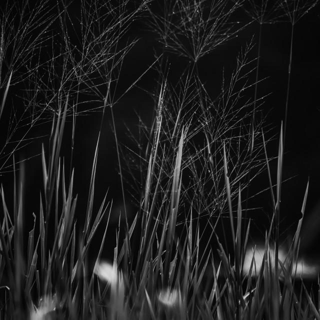 """Grass - Study 2"" stock image"