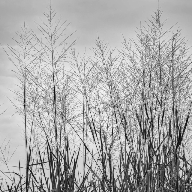 """Grass - Study 1"" stock image"