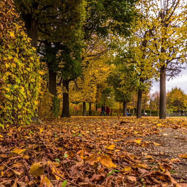 """""""Schönbrunn park in Vienna"""" stock image"""
