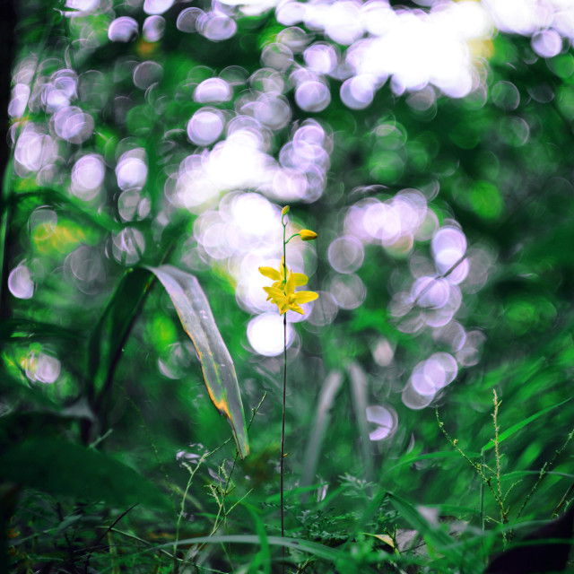 """Super Bokeh ^^ 