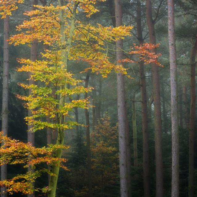 """Autumnal Glow"" stock image"