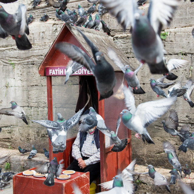 """Birds of a feature, Istanbul"" stock image"