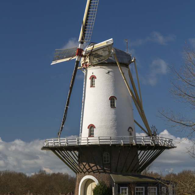 """""""White windmill in Veere 5"""" stock image"""