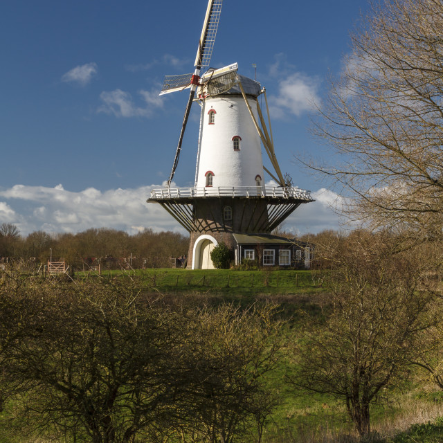 """""""White windmill in Veere 6"""" stock image"""