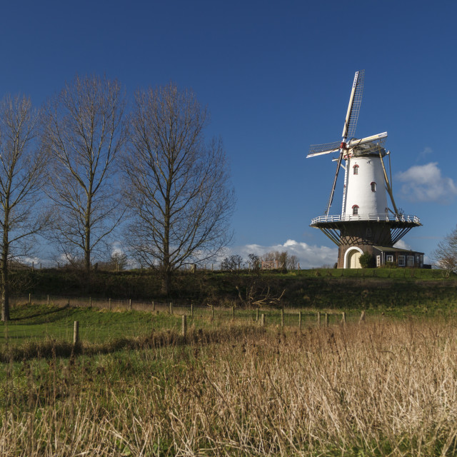 """""""White windmill in Veere 4"""" stock image"""