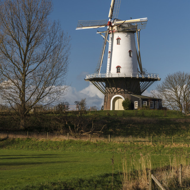"""""""White windmill in Veere 1"""" stock image"""