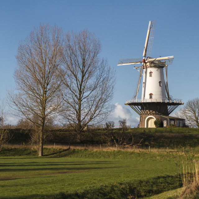 """""""White windmill in Veere 2"""" stock image"""