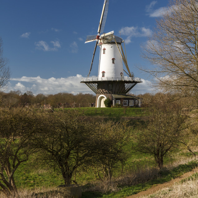 """""""White windmill in Veere 7"""" stock image"""