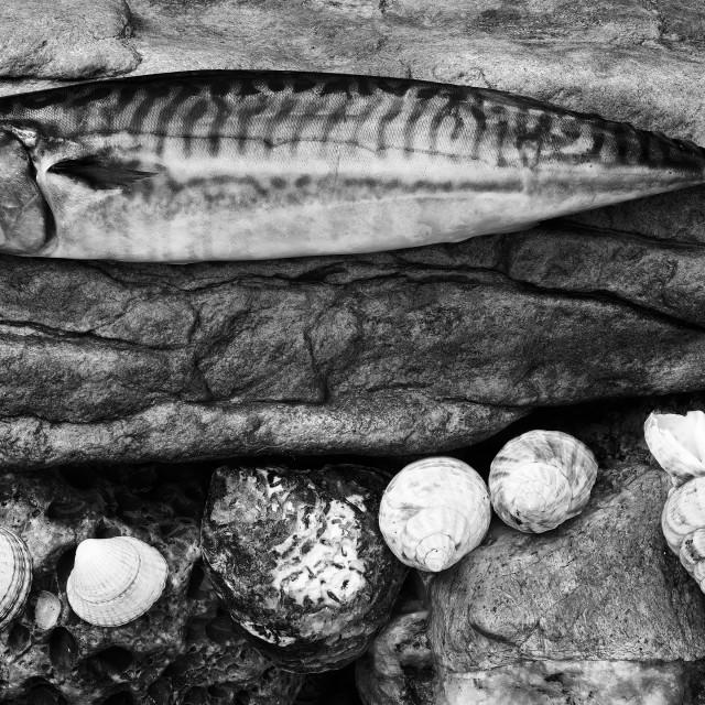 """""""Still life Mackerel"""" stock image"""