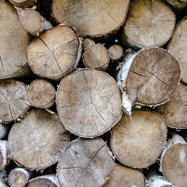 """""""Wood cut for winter time"""" stock image"""
